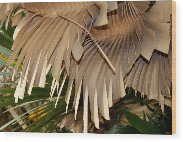 Bark Wood Print featuring the photograph Palm Bark by Kenna Westerman