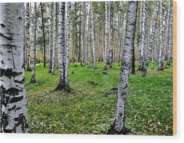 Tree Wood Print featuring the photograph Untitled by Vadim Grabbe