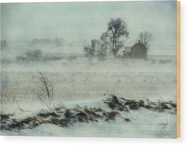 Landscapes Wood Print featuring the photograph Biding The Storm by Terrie Galvin