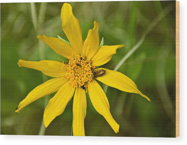 Wood Print featuring the photograph Bugs Paradise by JK Photography