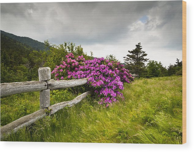 Carvers Gap Wood Print featuring the photograph Carvers Gap Roan Mountain State Park Highlands Tn Nc by Dave Allen