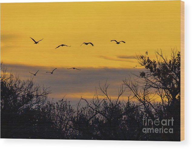 Bosque Del Apache Wood Print featuring the photograph Cranes In The Sunrise by Randy Jackson