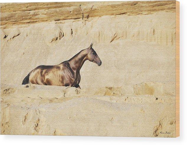 Horses Wood Print featuring the photograph Dagat by Artur Baboev
