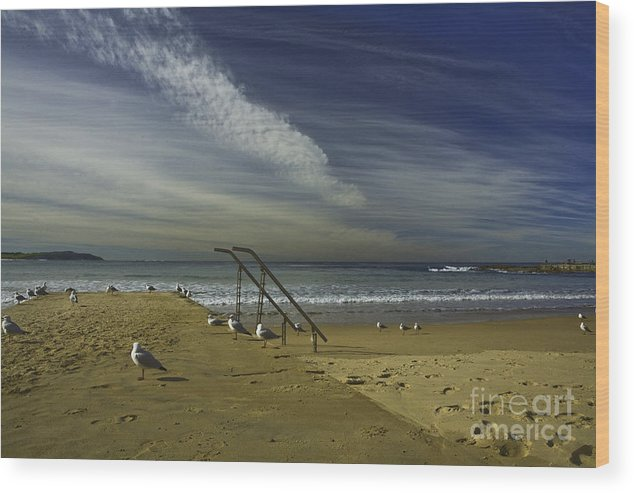 Beach Wood Print featuring the photograph Dee Why Beach Sydney by Sheila Smart Fine Art Photography