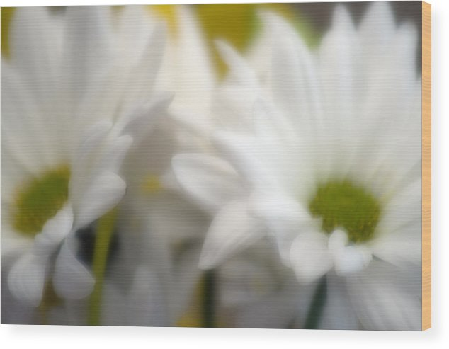 Floral Wood Print featuring the photograph Dreamy Daisies by Ayesha Lakes