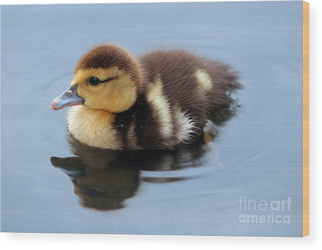 Baby Wood Print featuring the photograph Duckling by Jeannie Burleson