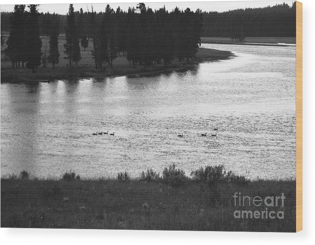 Wildlife Wood Print featuring the photograph Dusk At The Yellowstone River by Susan Chandler