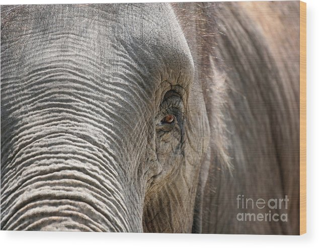 Asian Wood Print featuring the photograph Elephant Eye by Jeannie Burleson