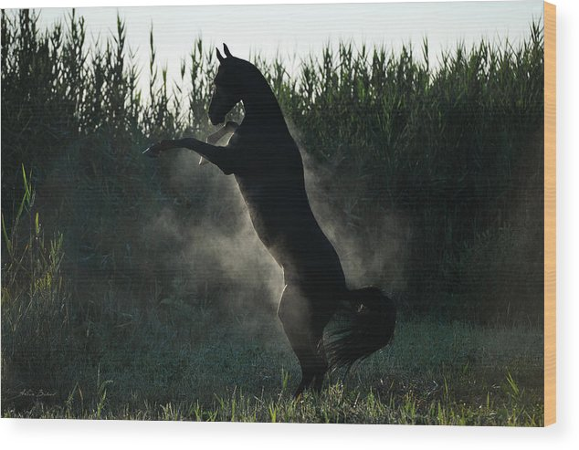 Horses Wood Print featuring the photograph Garagush #2 by Artur Baboev