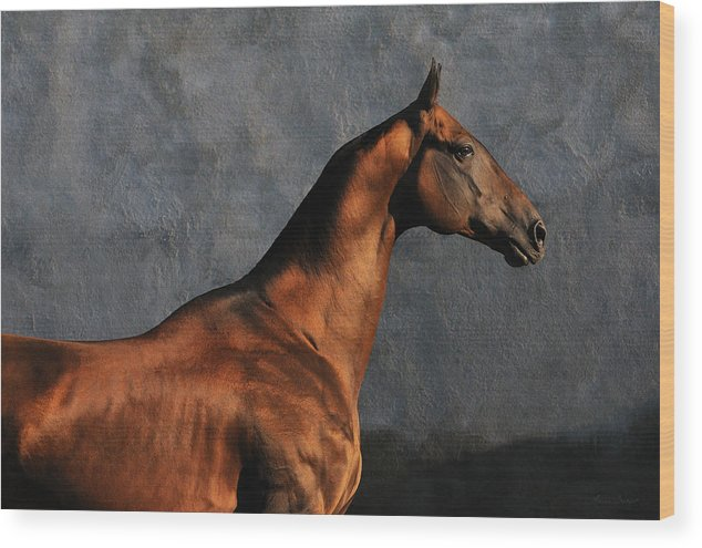 Horses Wood Print featuring the photograph Gench #2 by Artur Baboev