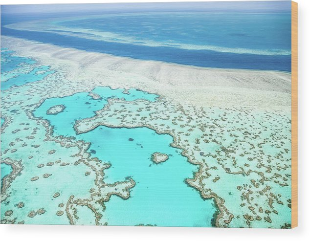 Australia Wood Print featuring the photograph Heart Reef by Az Jackson