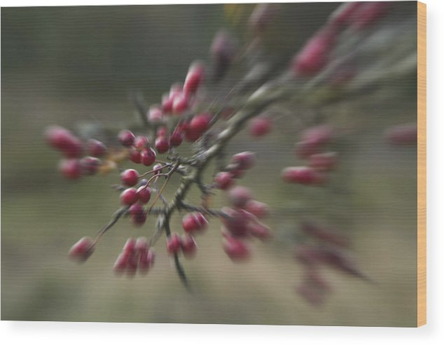 Denmark Wood Print featuring the photograph Last Colors Of Autumn by Wedigo Ferchland