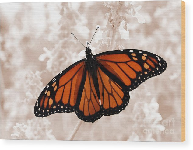 Monarch Wood Print featuring the photograph Monarch by Jeannie Burleson