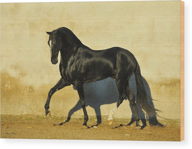 Horses Wood Print featuring the photograph Monmartr by Artur Baboev
