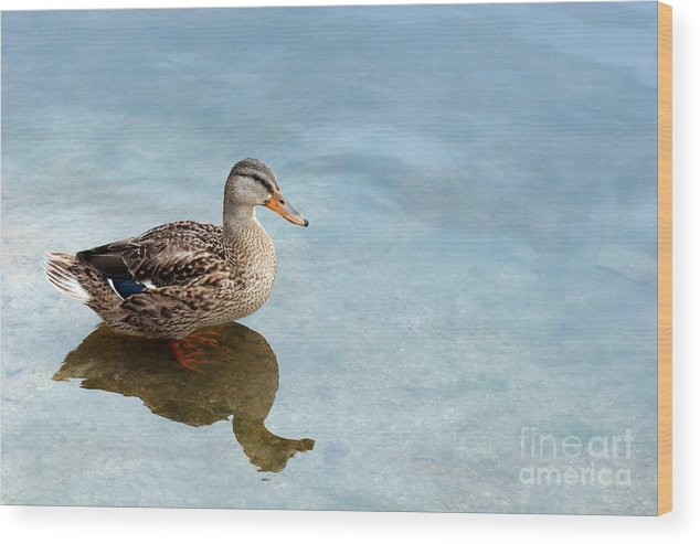 Duck Wood Print featuring the photograph Morning Swim by Jeannie Burleson
