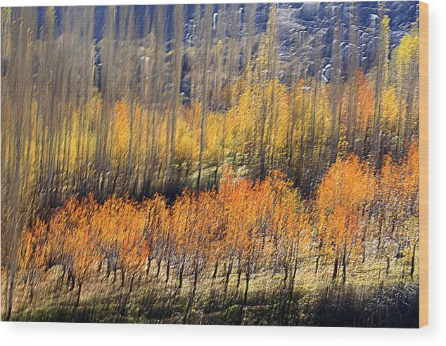 Autumn Wood Print featuring the photograph Ordered by Robert Shahbazi
