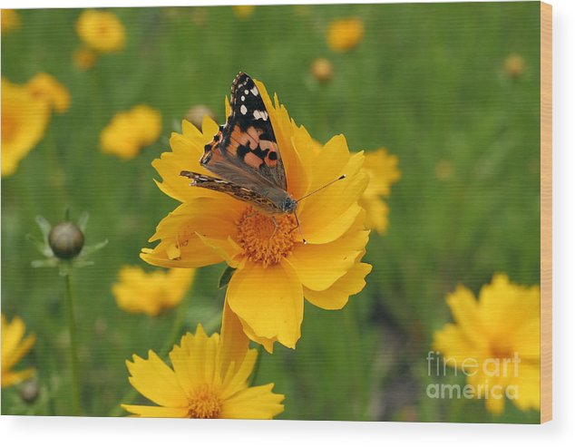 Painted Wood Print featuring the photograph Painted Lady Butterfly by Jeannie Burleson