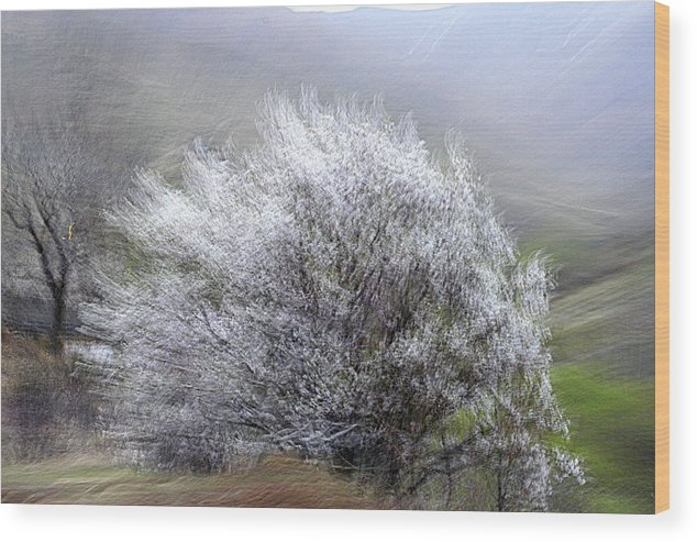 Spring Wood Print featuring the photograph Pretender by Robert Shahbazi