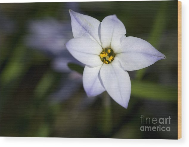 Purple Wood Print featuring the photograph Reaching For The Sun by Jeannie Burleson