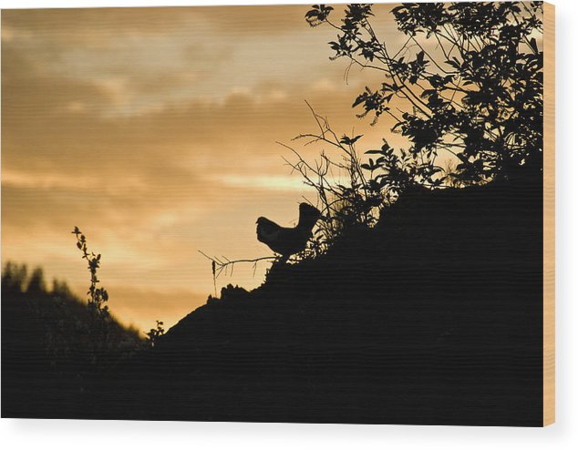 Wood Print featuring the photograph Ruffle Grouse Dusk by JK Photography