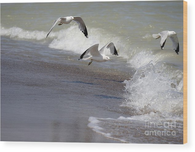 Seagull Wood Print featuring the photograph Take Flight by Jeannie Burleson