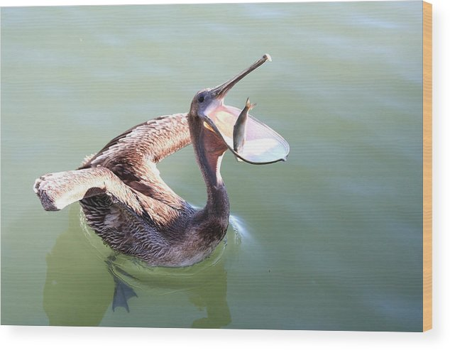 Pelican Wood Print featuring the photograph Thanks by Bonnie Anderson