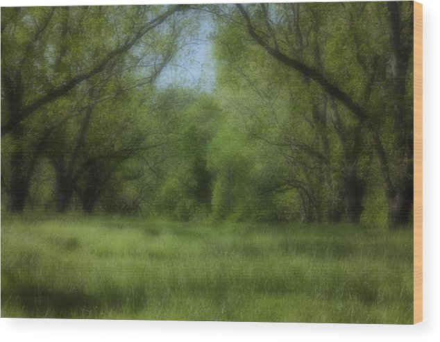 Landscape Wood Print featuring the photograph The Meadow by Ayesha Lakes