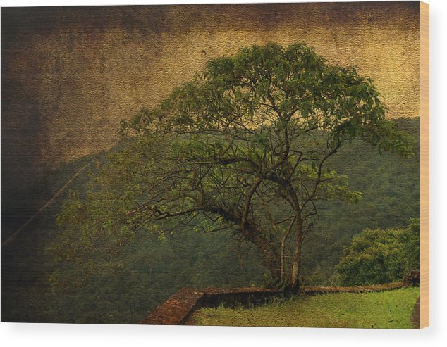 Illustration Wood Print featuring the photograph The Tree And The Range by Valmir Ribeiro