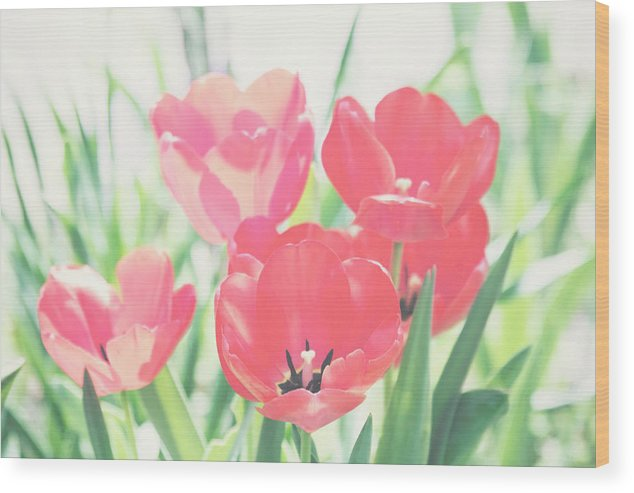Tulips Wood Print featuring the photograph Tulips by Toni Hopper