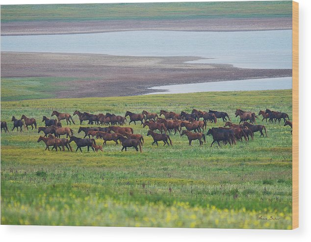 Horses Wood Print featuring the photograph Wild Horses #34 by Artur Baboev