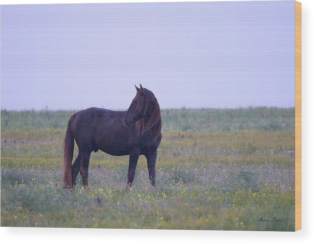 Horses Wood Print featuring the photograph Wild Horses #4 by Artur Baboev