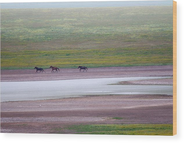 Horses Wood Print featuring the photograph Wild Horses by Artur Baboev