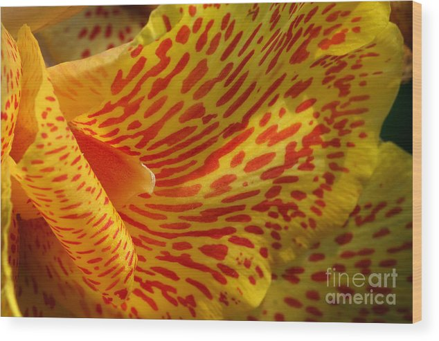 Canna Wood Print featuring the photograph Wild Petals by Jeannie Burleson