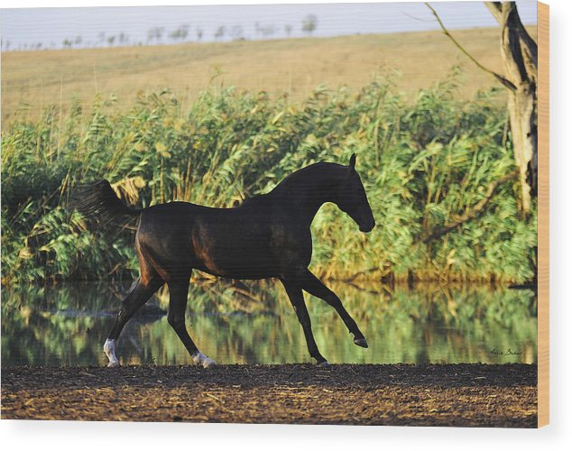 Horses Wood Print featuring the photograph Murgab by Artur Baboev