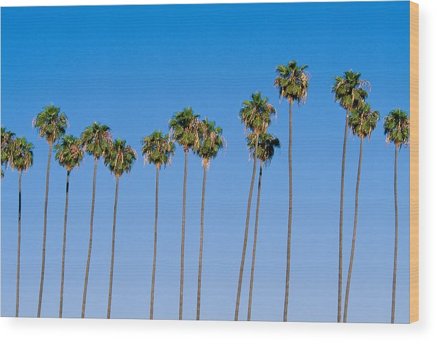 Blue Sky Wood Print featuring the photograph Row Of Palm Trees by Rich Iwasaki