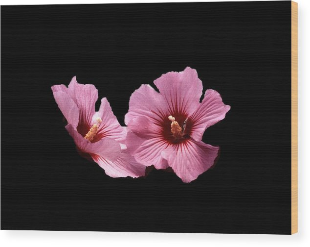 Flower Wood Print featuring the photograph 102708-1 Standing Out by Mike Davis