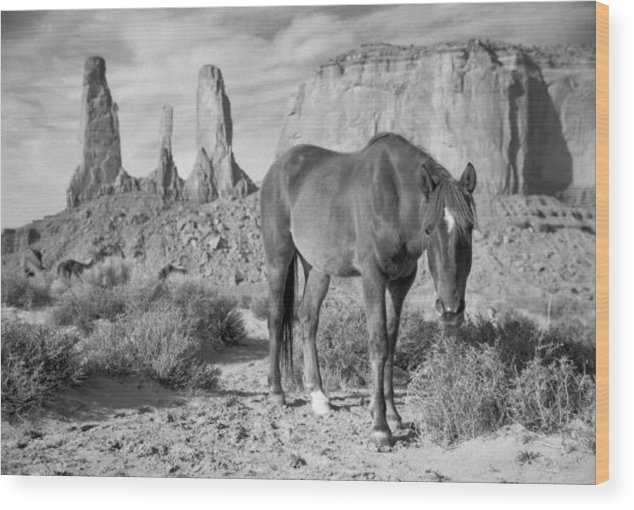Horses Wood Print featuring the photograph Curious Mustang by Kevin Dyer