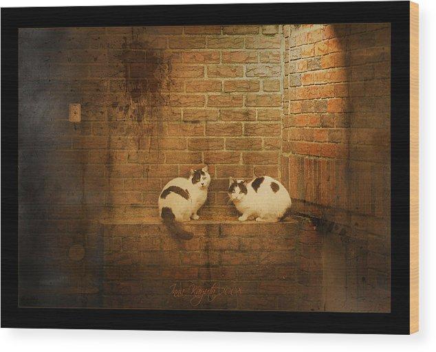 Cats Wood Print featuring the photograph Spotlight by Inesa Kayuta