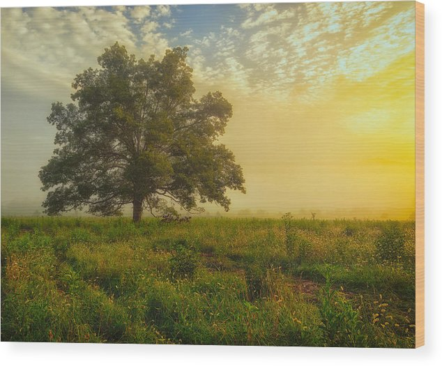 Fine Arts America Wood Print featuring the photograph The White Oak Tree by Gwen Cross