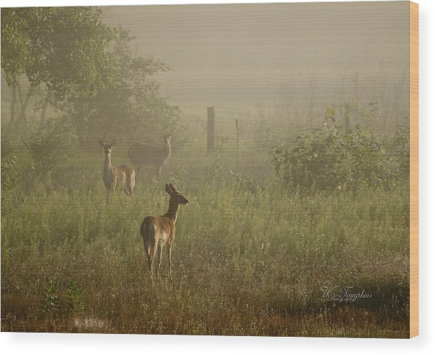 Deer Wood Print featuring the photograph Deer In Foggy Field by Wendy Tompkins