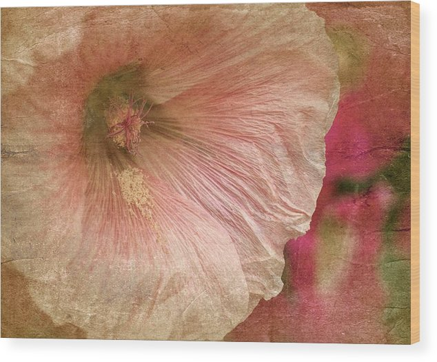 Beige Hollyhock Wood Print featuring the photograph Hollyhock by Richard Cummings