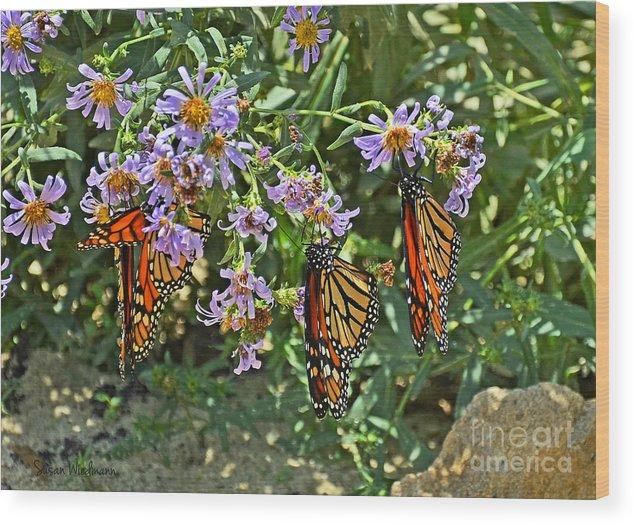 Susan Wiedmann Wood Print featuring the photograph Monarch Butterfly Trio by Susan Wiedmann