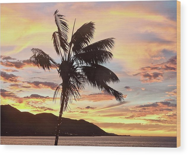 Travel Photography Wood Print featuring the photograph Palm by Aaris K