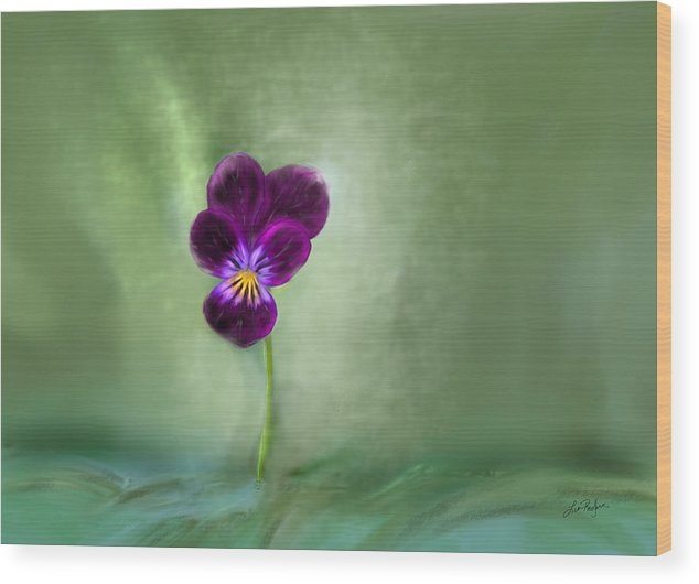 Pansy Wood Print featuring the digital art Pansy by Lisa Redfern