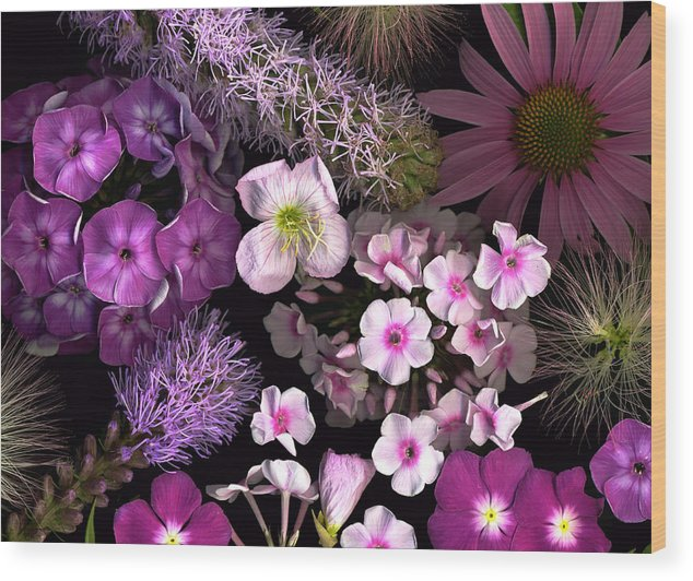 Scanography Wood Print featuring the photograph Pretty In Pink by Deborah J Humphries