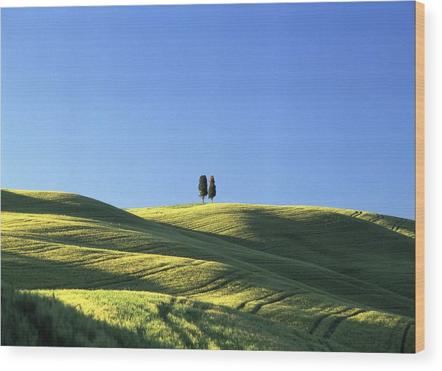 Tuscany Wood Print featuring the photograph Tuscan Evening by Michael Hudson