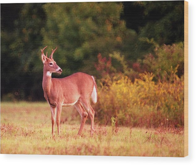 Deer Wood Print featuring the photograph 070406-58 by Mike Davis