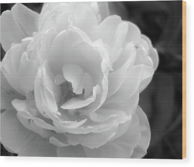 Flower Ghost Wood Print featuring the photograph Flower Ghost by Josephine Z Nyounai