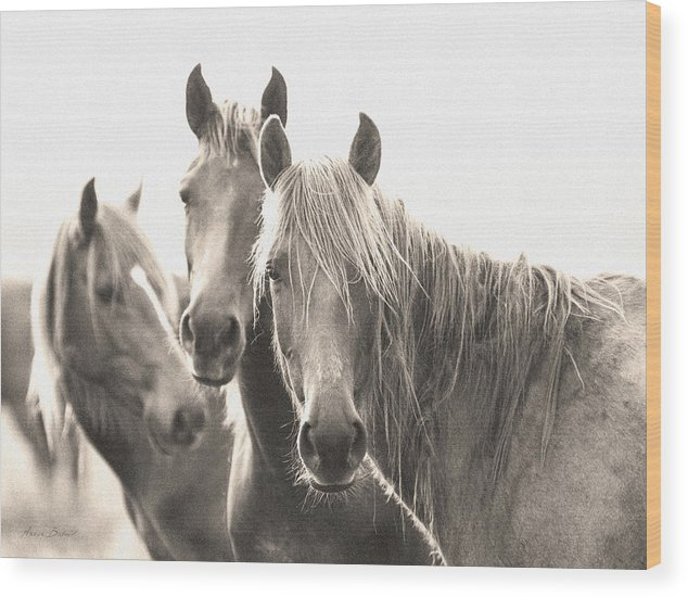 Horses Wood Print featuring the photograph Wild Horses #2 by Artur Baboev