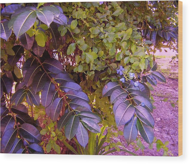 Tropical Plants Wood Print featuring the photograph The Blues Of Green by Charles Peck
